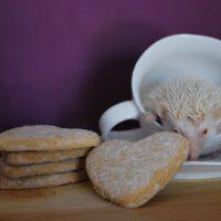 hedgehog photography